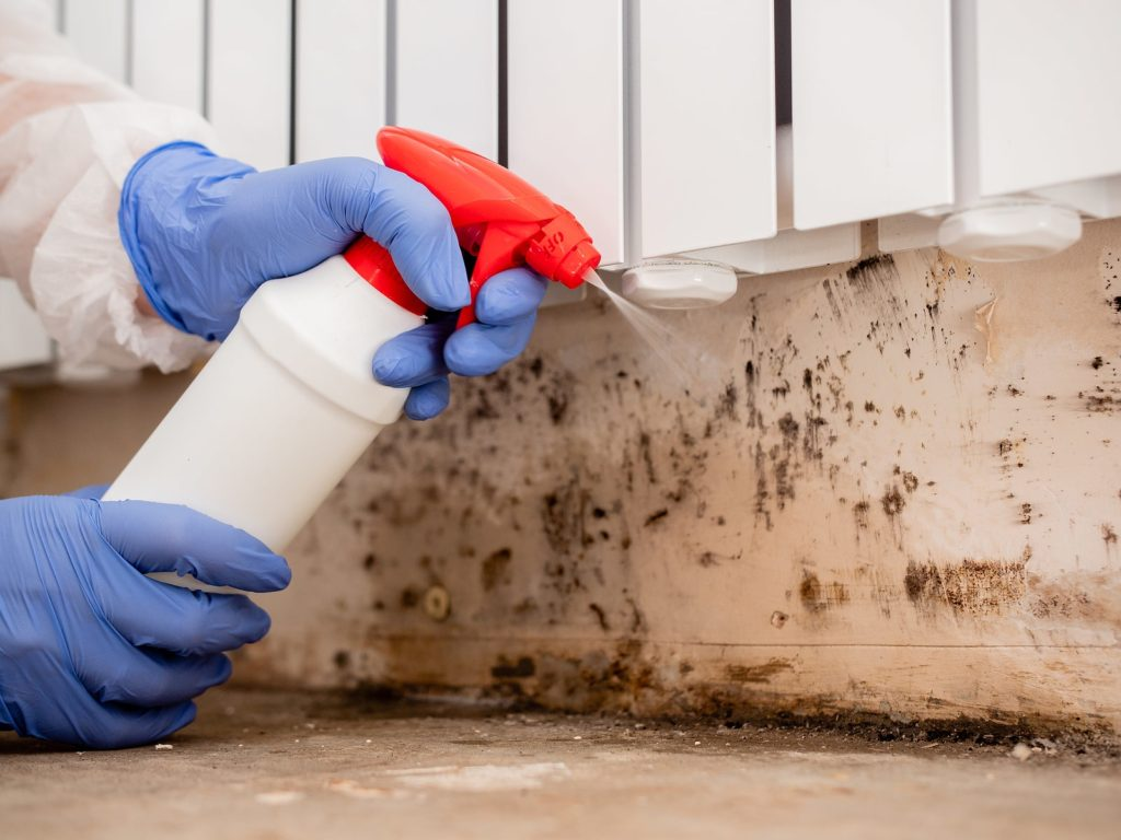 home mold removal from internal walls